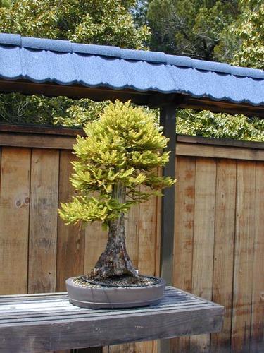 Name:  bonsai_16.jpg Views: 96 Size:  48.3 KB