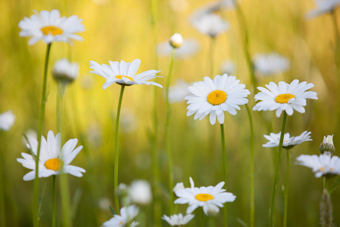Name:  Daisy5.jpg Views: 42 Size:  45.0 KB