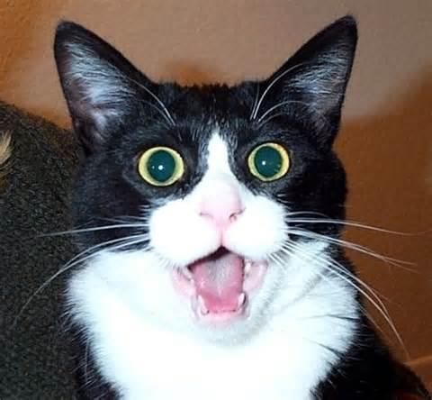 Name:  cat.jpg Views: 120 Size:  26.1 KB