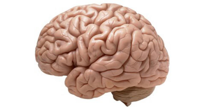 Name:  brains-so-big--l.jpg Views: 24 Size:  24.0 KB
