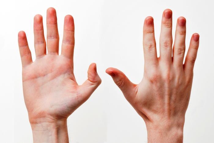 Name:  Human-Hands-Front-Back.jpg Views: 24 Size:  27.4 KB